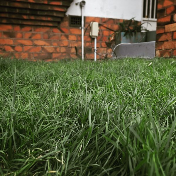 Great Southern lawn mix