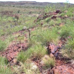 Southern Revegetation mix